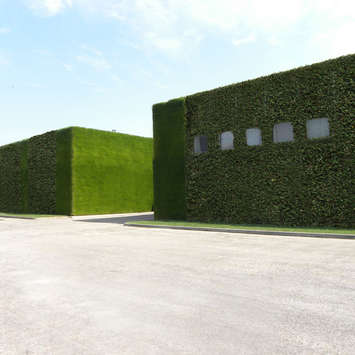 Vertical vegetable garden - Michele Chiarlo Wine company Asti